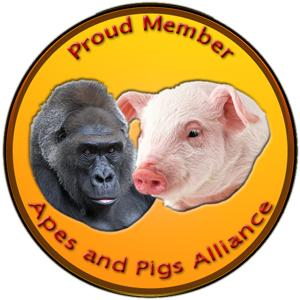 apes_and_pigs1