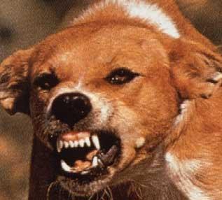 rabid_dog_small.jpg
