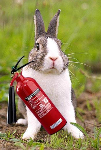 fire-bunny