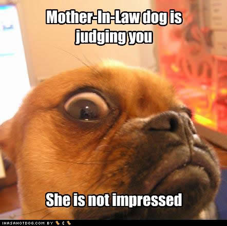 funny-dog-pictures-mother-judging