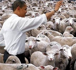 obama-sheep.jpg