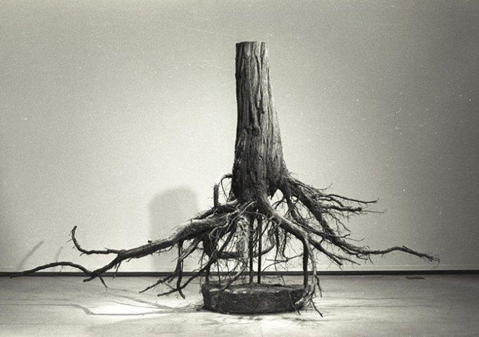 uproot_displacementart_bw