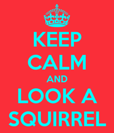 keep-calm-and-look-a-squirrel-1