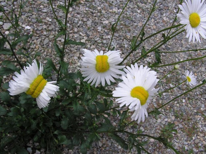 Mutant-flowers