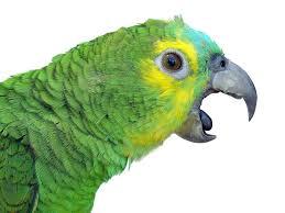 parrotical